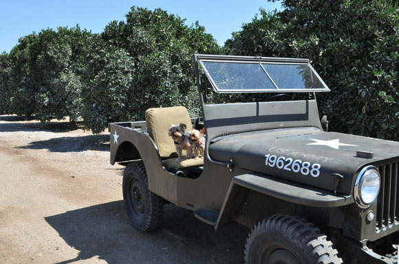 Cari Lee's 1948 Willys CJ-2A